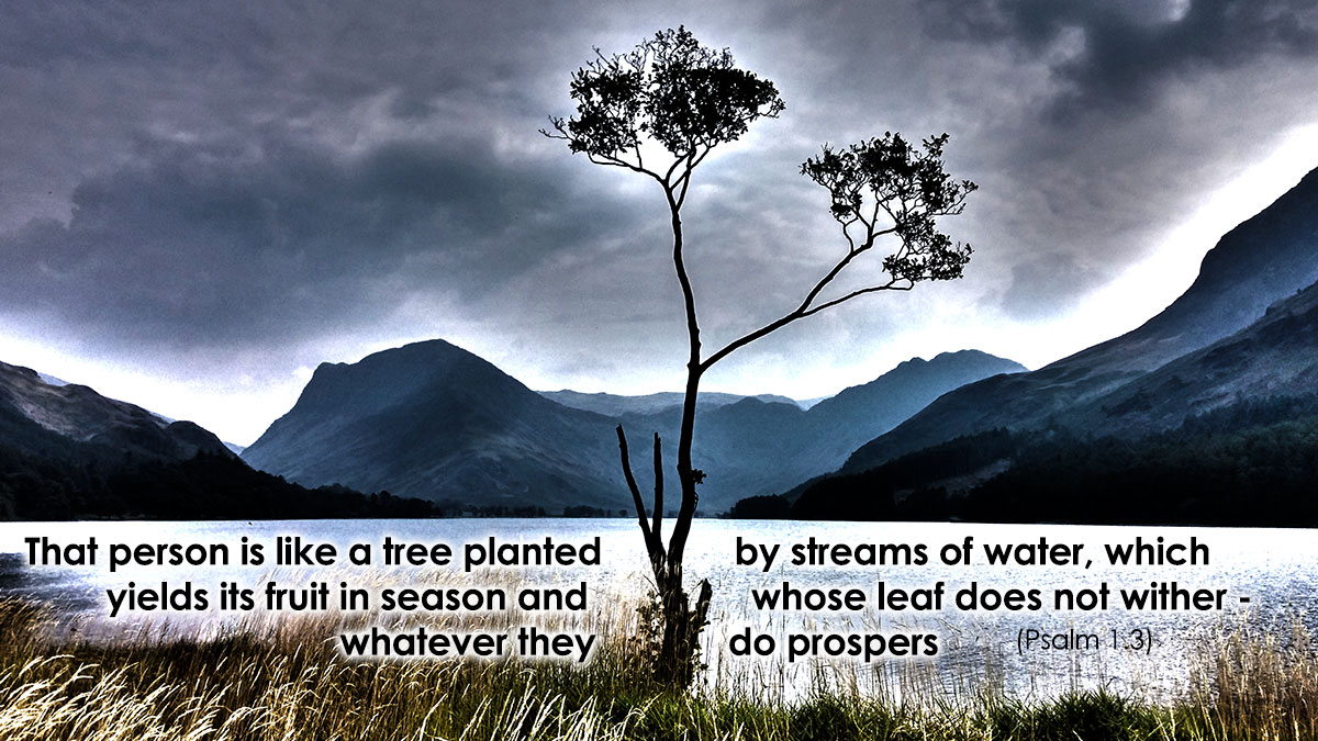 A tree planted by streams of water - Psalm 1.3